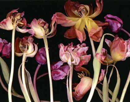 "Ausstellung: ""Florale Scanogramme"" Matthias Weber 7.6.-4.7.2020"